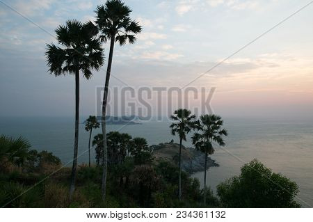 Beautiful Scenic View Of Palm Trees And Cloudy Sky During Sunrise In Phuket