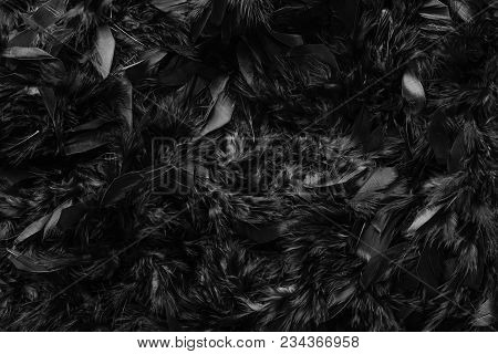 Close Up Of Dark Black Feather Wool Texture Abstract Background, Black Feathers Fur Texture Fashion