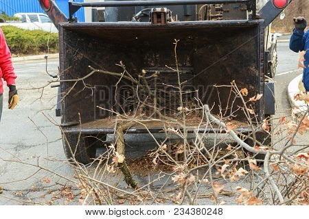 Landscapers Using Chipper Machine To Remove And Haul Chainsaw Tree Branches Machine For Cutting Tree