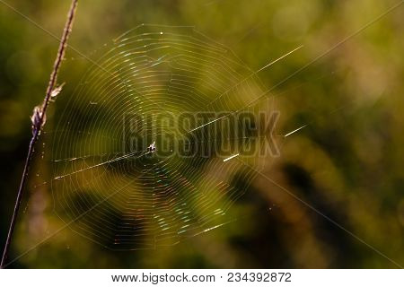 Cobweb With A Small Spider In The Center Shimmers With All The Colors Under The Rays Of The Setting