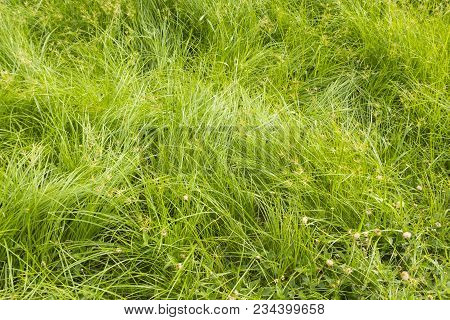 Background Of Close Up In Mess Grass In Grassland In Sunlight