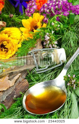 Fresh Herbs For Herbal Medicine On A Spoon