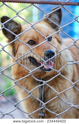 Abandoned Dog In The Kennel, Homeless Dog Behind Bars In An Animal Shelter.sad Looking Dog Behind Th