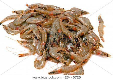 Shrimp Pile