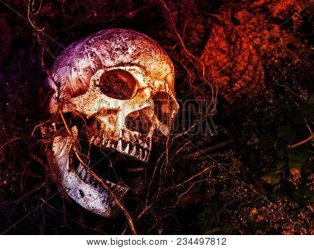 In Front Of Human Skull Buried In The Soil With The Roots Of The Tree On The Side. The Skull Has Dir