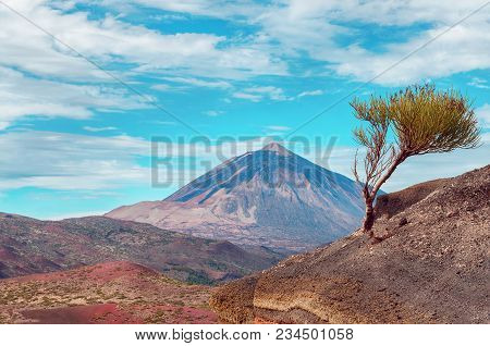 Volcano  El Teide  In The National Park Of Las Canadas Del Teide. Best Place To Visit In Tenerife Ca