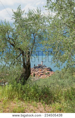 View From Green Olive Grove To Tourist Destination Malcesine And Scaliger Castle
