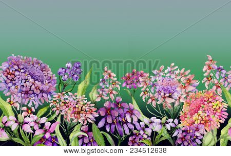 Colorful Summer Wide Banner. Vivid Iberis Flowers With Green Leaves On Gradient Green Background. Ho