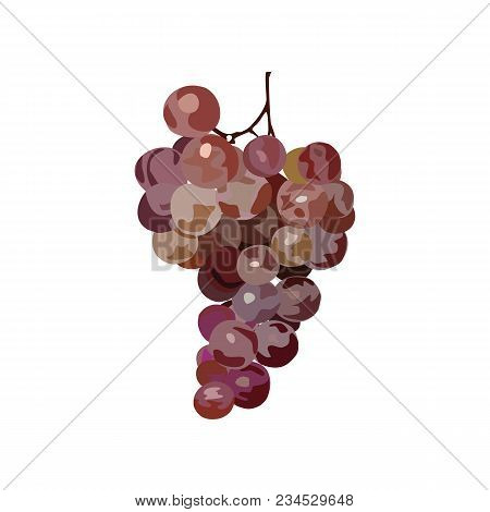 Bunch Of Grapes. Vector. Hand Drawen Grape. Watercolor Imitation. Isolated Bunch Of Grapes On White