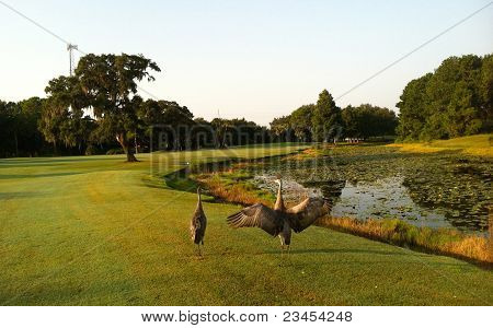 Birds on the golf course