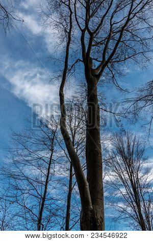 Trees And The Blue Sky In The Middle Of The Forest