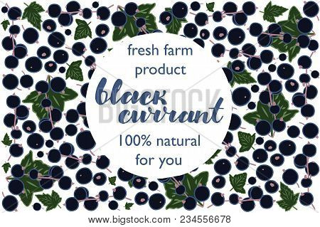 Vector Illustration Of Black Currant Berry And Leaf Design With Lettering Black Currant Background B