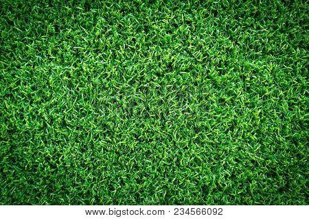 Green Grass Texture, Green Grass Background. Top View Of Green Grass For Golf Course And Soccer Fiel