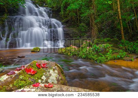Mun Dang Waterfall With A Pink Flower Foreground In Rain Forest At Phitsanulok Province, Thailand
