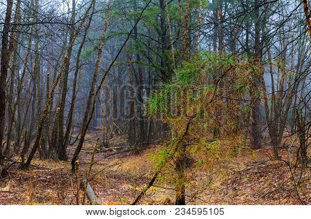 Mystical Forest Fog Landscape Of Forest In The Mist With Path Through A Forest With Black Trees And