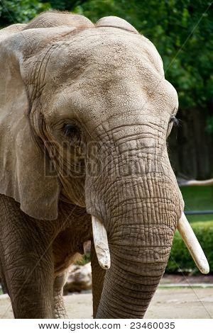 An elephant never forgets