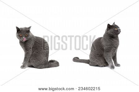 Cat With Yellow Eyes Sitting On A White Background. Horizontal Photo.