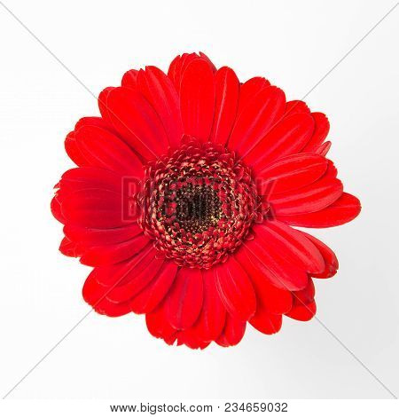 Cute Red Flower On White Blank Background