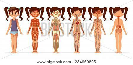 Girl Body Anatomy Vector Illustration. Cartoon Medical Female Human Body Structure Of Muscular, Skel