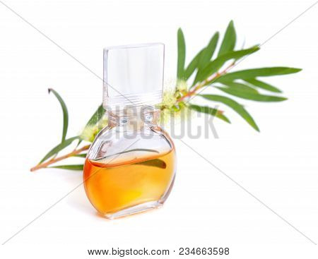 Melaleluca (tea Tree) Essential Oil With Twig And Flowers. Isolated On White Background.