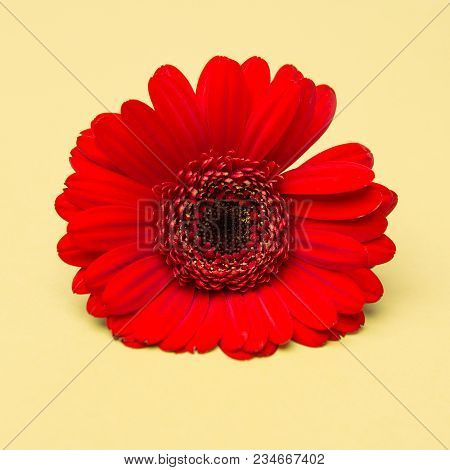 Beauty Cute Red Flower On Yellow Background