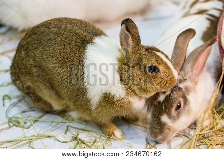 Two Rabbits Are Playing In The Zoo.