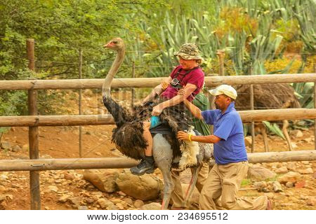 Oudtshoorn, South Africa - Jen 6, 2014: Funny Tourist Enjoying Ostrich Riding At Cango Ostrich Show