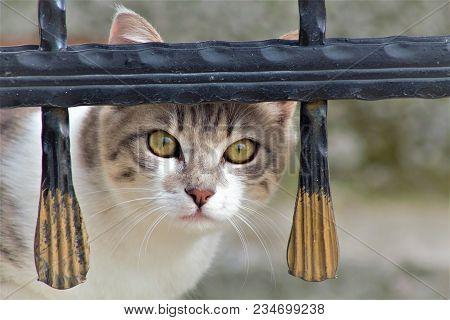 Şaşkın Bakışlar Ile Meraklı Bakışları Olan Kedi.