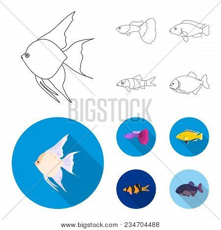 Botia, Clown, Piranha, Cichlid, Hummingbird, Guppy, Fish Set Collection Icons In Outline, Flat Style