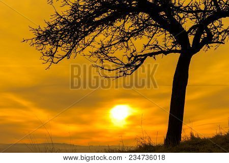 Silhouette Of A Single Tree With A Fireball At Morning