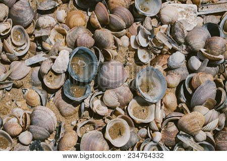 Seashells Background On The Seashore. Collection Of Many Different Seashells At The Beach. Close Up