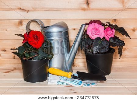 Seedlings Flowers And Watering Can On Wooden Background