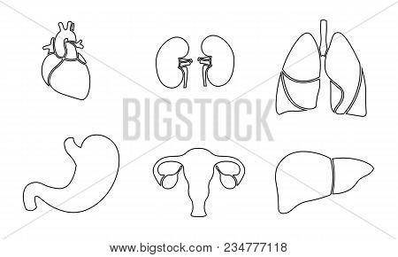 Human Organ Icon Symbol Medicine Logo Set. Heart Kidney Lungs Womb Stomach Liver Innovation Medical