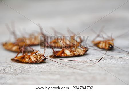 Dead Cockroaches Nest ,cockroaches Die On Wooden Background
