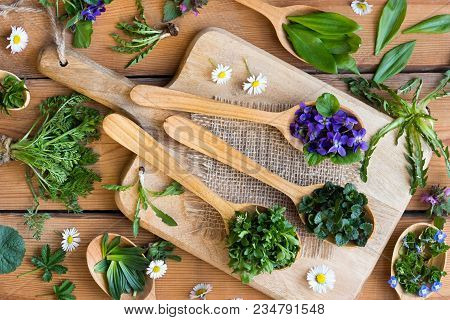 Fresh Wild Edible Spring Herbs On Wooden Spoons: Ground-ivy, Veronica, Chickweed, Violet Flower, Wil