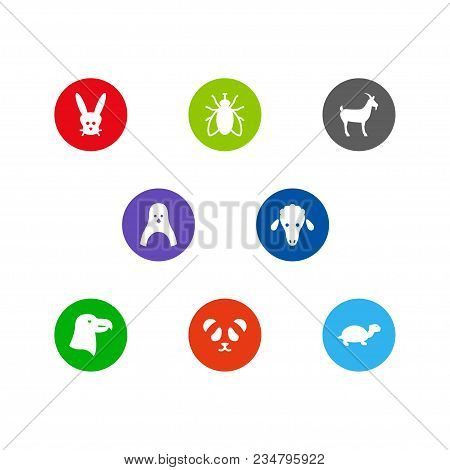 Set Of 8 Zoo Icons Set. Collection Of Lamb, Aquila, Livestock And Other Elements.