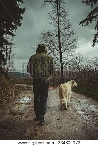 Man In Bumber Jacket With Hood On The Head Walking With His Dog (irish Wolfhound) On The Path  Throu