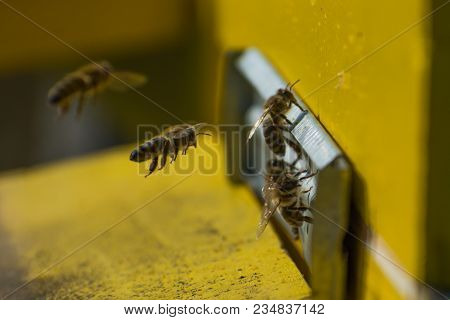 Hives In An Apiary. Bees Flying To The Landing Boards And Enter The Hive, Bee Flying To Hive.