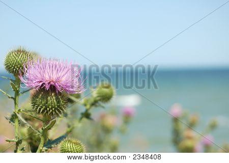 Flower On Seacoast