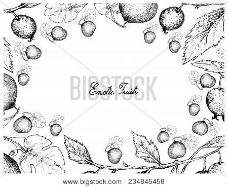 Berry Fruits, Illustration Frame Of Hand Drawn Sketch Bunch Of Casaba Melon And European Nettle Tree