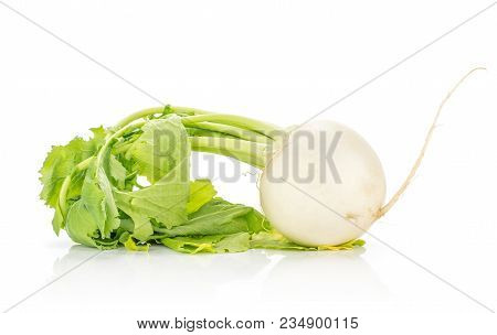One White Radish Bulb With Fresh Leaves Isolated On White Background