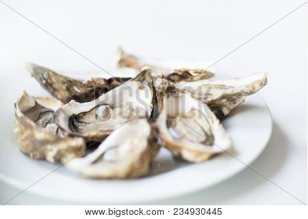 Fresh oysters. Raw fresh oysters are on white round plate, image isolated, with soft focus. Restaurant delicacy. Fresh raw oysters. Saltwater oysters.