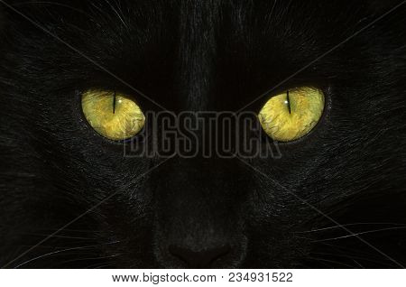Head Close Up Of A Black Cat Detailing Yellow And Green Eyes With A Slit Form Pupil And Visible Vena