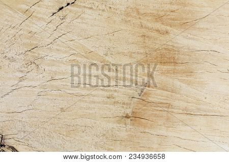 Close-up Of A Cross-section Of A Tree Trunk, Rotation,