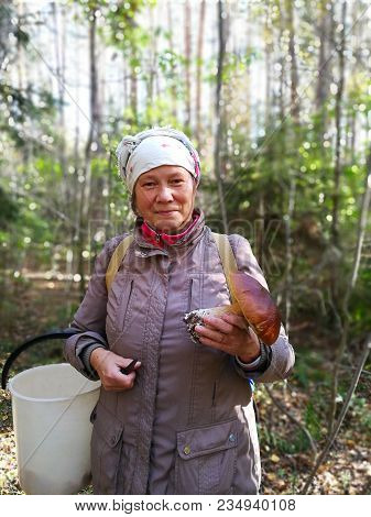 White Fungus In The Hands Of A Forester