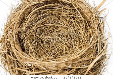 Close Up Of An Empty Nest.  Focus In The Center Of Nest.