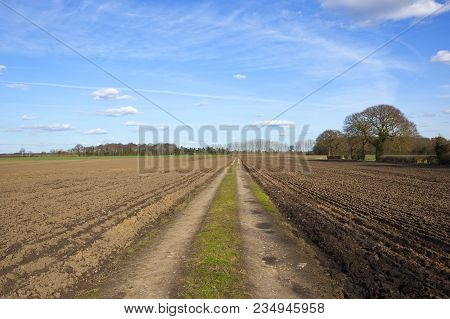 A Straight Farm Track In Springtime With Newly Plowed Fiels On Both Sides And Pine And Poplar Woodla