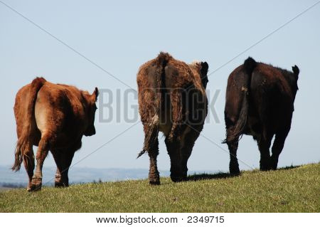 Goodbye Cow Trio