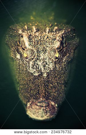 Close-up Portrait Of Crocodile In Green Water. Muzzle And Intense Yellow Eyes. Partially Immersed In