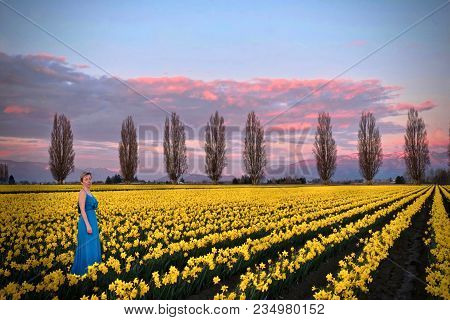 Woman In Spring Fields Meadows With Yellow Flowers. Romantic Evening On  Daffodils Fields Near Seatt